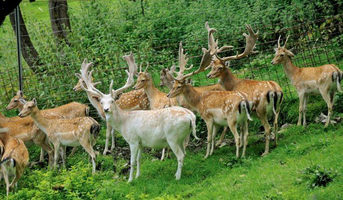 Wildpark Untertauern - Sommerurlaub in Obertauern, Salzburger Land